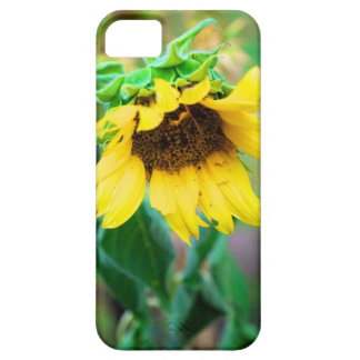 After the Rain iPhone 5 Covers