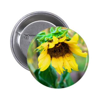 After the Rain Pinback Buttons