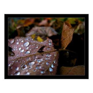 After the Rain Print