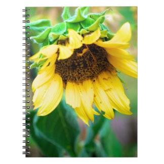 After the Rain Spiral Note Book