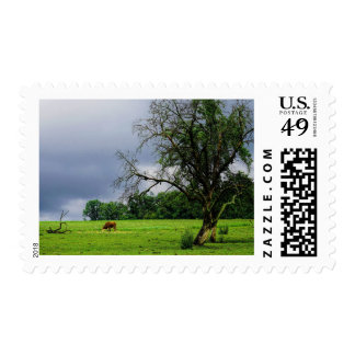 After the Storm Postage Stamp