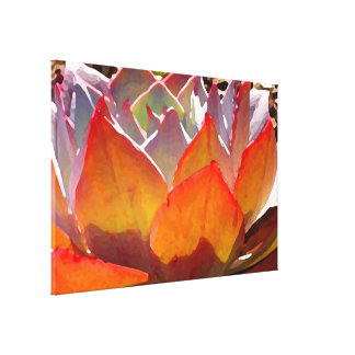 Afterglow Succulent by Amy Vangsgard Gallery Wrapped Canvas