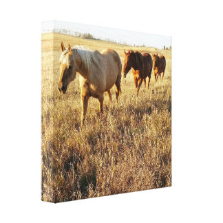 Afternoon Horse Canvas