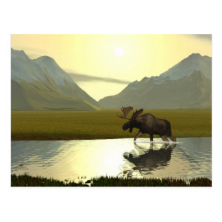 Afternoon Moose Postcard
