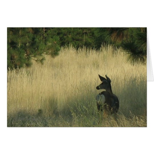 Afternoon Mulie, Greeting Card by Mark Easton