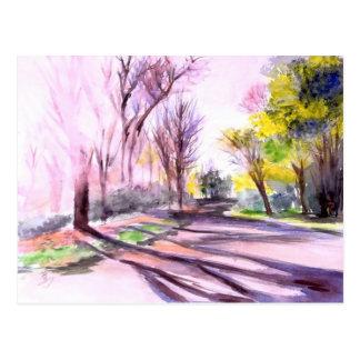 AFTERNOON SUN ON A ROAD, Ann Arbor, MI Postcard