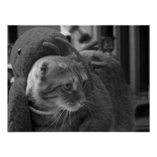 Agadore Spartacus: Tabby Cat Posters