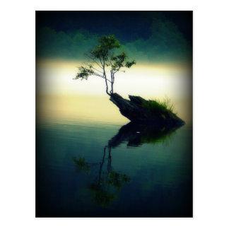 Against All Odds - Beautiful Tree Photograph Postcard