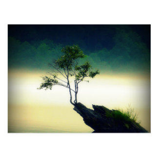 Against All Odds - Beautiful Tree Photograph Post Card