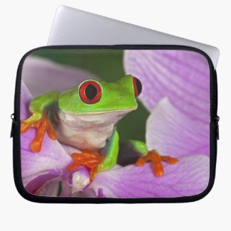 The Red-Eyed Tree Frog On A Laptop Sleeve