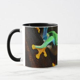 Agalychnis Callidryas In Terrarium Mug