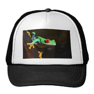 Agalychnis Callidryas In Terrarium Trucker Hat