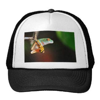 Agalychnis Callidryas The Tree Frog In Terrarium Trucker Hat