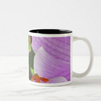 Agalychnis callidryas Two-Tone coffee mug