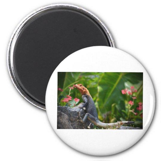 Agama - el lagarto del arco iris imán redondo 5 cm