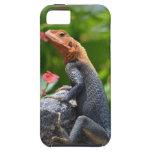 Agama - el lagarto del arco iris iPhone 5 cárcasa