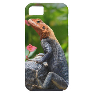 Agama - el lagarto del arco iris iPhone 5 funda