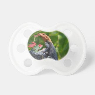 Agama - The Rainbow Lizard BooginHead Pacifier