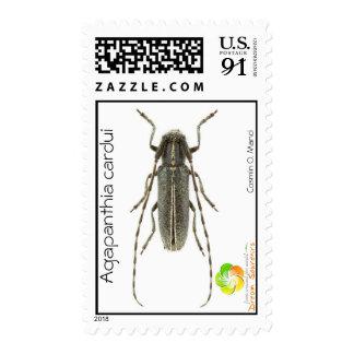 Agapanthia cardui postage