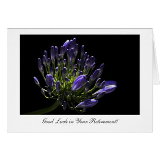 Agapanthus, African Lily, Good luck in Retirement Card