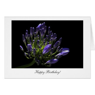 Agapanthus, African Lily - Happy Birthday Card