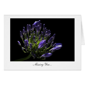 Agapanthus, African Lily - Missing You Greeting Card