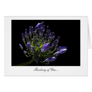 Agapanthus, African Lily - Thinking of You Card