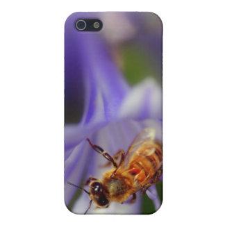 agapanthus africanus iPhone 5 cases