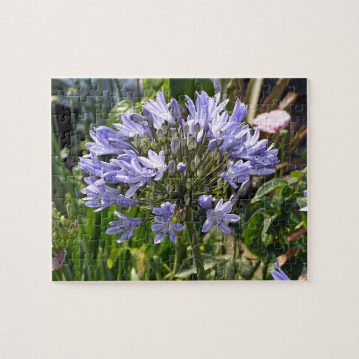 Agapanthus azul que florece en un día soleado puzzle con fotos