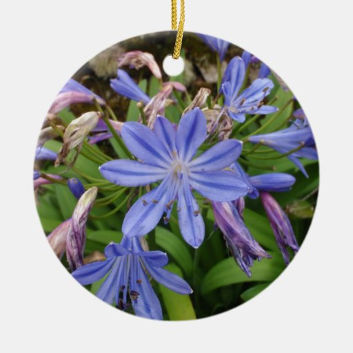 Agapanthus blooms christmas ornaments