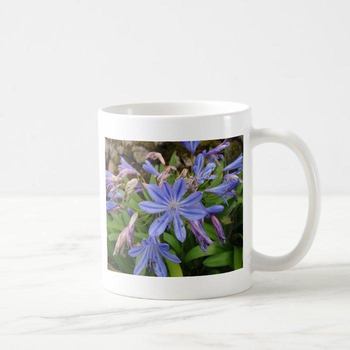 Agapanthus blooms coffee mug