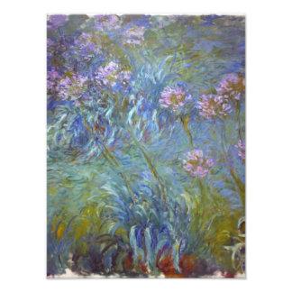 Agapanthus de Claude Monet Arte Fotográfico