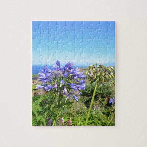 Agapanthus en las Azores Puzzle Con Fotos