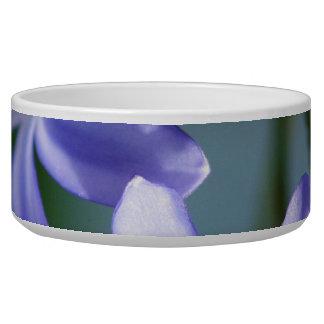 Agapanthus flower blooms bowl