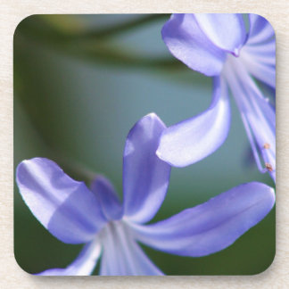 Agapanthus flower blooms drink coaster
