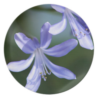 Agapanthus flower blooms melamine plate