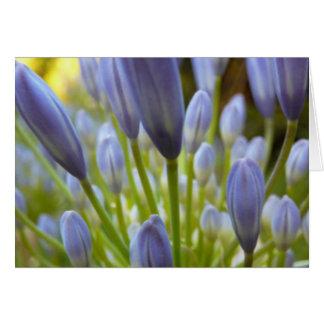Agapanthus flower cards