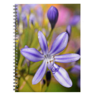 Agapanthus flower spiral note books