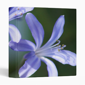 Agapanthus Flowers binder