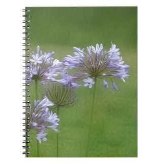 Agapanthus Gifts Notebooks