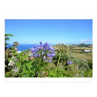 Agapanthus in the Azores Postcard
