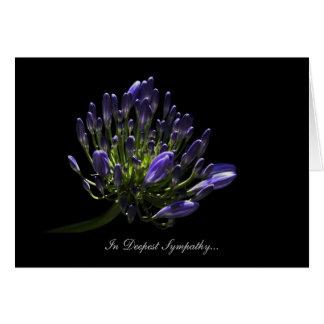 Agapanthus, lirio africano - en la condolencia más tarjeta de felicitación