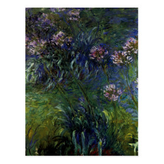 Agapanthus Post Cards