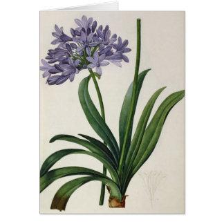 Agapanthus umbrellatus greeting card