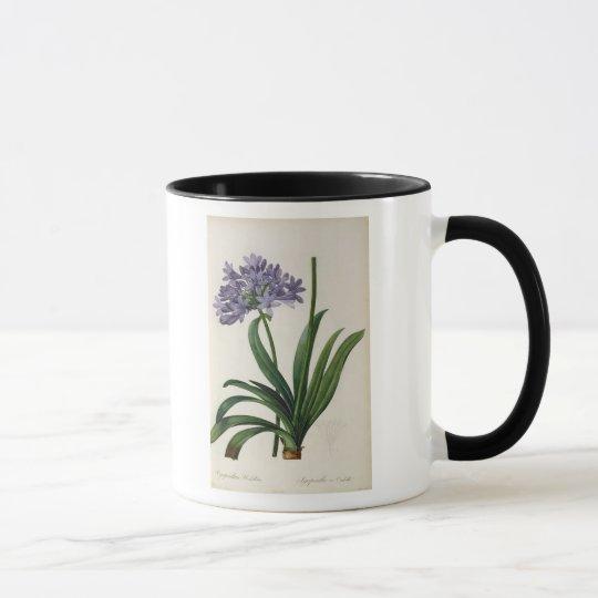 Agapanthus umbrellatus mug