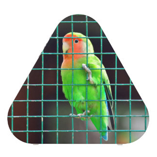 Agapornis Lovebird green bird colored small parrot Speaker
