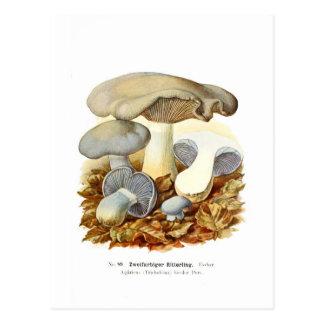 Agaricus bicolor post cards
