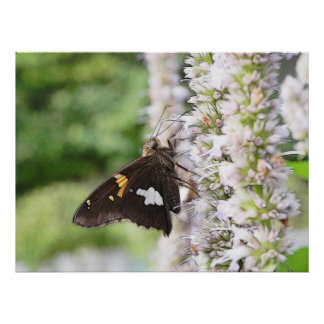 Agastache And Skipper Butterfly Posters