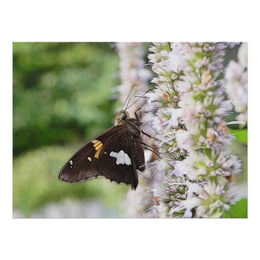 Agastache And Skipper Butterfly Poster