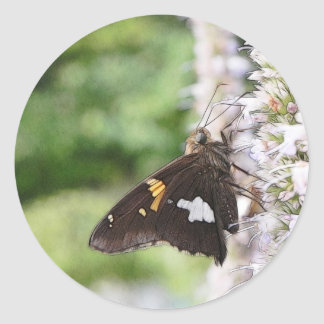 Agastache And Skipper Butterfly Classic Round Sticker
